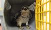 На Московском проспекте от кошек спасли краснокнижную птицу
