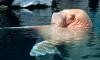 Тренера Приморского океанариума уволят за рукоприкладство к моржу