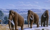 Незамерзающая кровь мамонтов - теорию подтверждает находка ученых