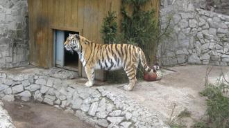 Петербуржцы хотят оставить Ленинградский зоопарк на Петроградской стороне
