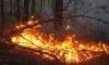 Лесной пожар в Забайкалье перекинулся на жилой поселок