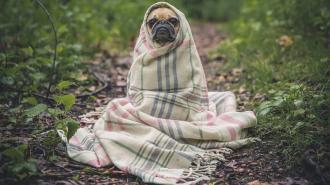 В Петербурге не отключат отопление из-за холодной погоды