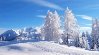 В Ленинградской области выпал первый снег