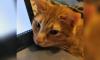 В Петербурге ищут дом коту, который хотел покататься на метро