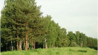 Более 8 тысяч человек пострадали от клещей в Вологодской области