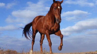 На юге Москвы иномарка сбила насмерть лошадь