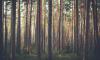 Ленобласть заготовила 1,5 тыс. тонн семян на лесовосстановительный сезон