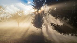 МЧС предупредило об утреннем тумане в Ленобласти 30 апреля