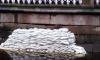 Кот оккупировал мешки на канале Грибоедова