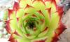 В Ботаническом саду зацветет кубинская агава, которой уже 43 года
