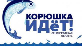 """Областной фестиваль """"Корюшка идет!"""" состоится в Новой Ладоге"""