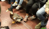 """В петербургском метро утка-попрошайка """"терроризирует""""пассажиров"""
