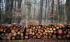 Из Ленобласти и Петербурга за 2019 год экспортировали 3,5 млн кубов леса