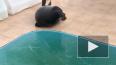 Тюлень Крошик напомнил, что выходить на лед опасно