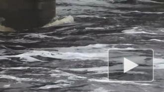 Жители Амурской области публикуют видео небывалого наводнения