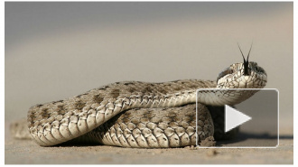 Во Владимирской области девочку в лесу укусила змея — ребенок умер в реанимации