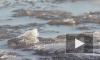 Спасатели нашли тело упавшего в Обводный канал