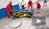 Новости Новороссии: штурмовая авиация продолжает бомбить Луганск