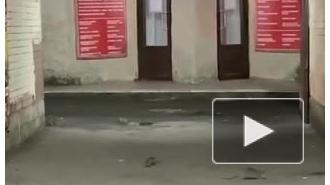 Петербуржцы увидели в центре города стаю крыс