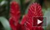 Праздник для глаз: Орхидеи и бромелии в Ботаническом саду Петербурга