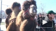 Праздник живота. 3-тонный кулич съели жители Купчино