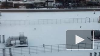 Полиция применила газ на акции протеста в Петербурге