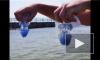 Рак - герпес - медузы - сенсациенное открытие!