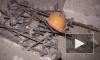На стройке в Мурино погибли рабочие-мигранты