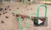 """Полиция 5,5 часов искала детей, ушедших в """"поход по неизведанным местам"""" в Купчине"""