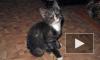 Уникальные кадры с котенком, которым дети-живодеры из Липецка играли в бейсбол