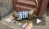 Кошка Тишина Матроскина вернулась на прежнее место