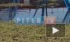 В Петербурге дикие утки устроили гнездо под опорой ЛЭП