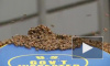 Видео из Нью-Йорка: Более 30 тысяч пчел облюбовали палатку с хот-догами на Таймс Сквер