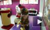 В сети появилось видео кота-математика из Петербурга: животное считает в уме