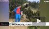 В Италии 12-летний мальчик спокойно ушел от преследовавшего его медведя