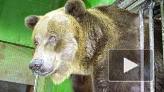 В Ленинградском зоопарке умерла старейшая медведица Варвара, ей было 36 лет