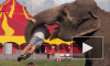 Прохожие в шоке - слоны гуляют в Купчино