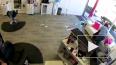 Видео из Нью-Йорка: Дикий олень ворвался в парикмахерскую ...