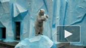 Шоу голодных медведей