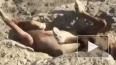 В Казахстане мужчины спасли жеребенка, которого задавило ...