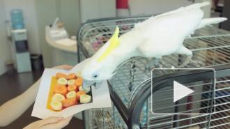 Попугай-пророк скучает по ЧМ-2014
