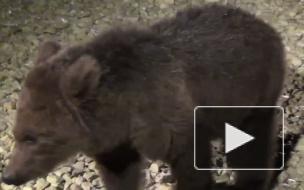 Медвежат, запертых в одном из гаражей в Купчино, спасли