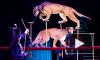 Братья Запашные привезли в Петербург новое цирковое шоу