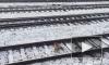 Видео: лиса не заметила поезд