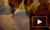 """""""Гоголь. Начало"""" выиграл """"ТЭФИ"""" в номинации """"Лучшие событие сезона"""""""
