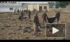 Найден черный ящик разбившегося в Пакистане «Боинга 737»