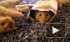 Домашние питомцы могут жить вечно: в Китае научились клонировать котят