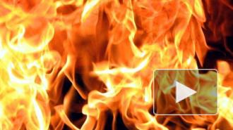 Ночью в Петербурге машины горели и сшибали столбы