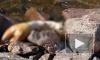В Кронштадте мужчины избили до смерти собаку и выкинули в Финский залив