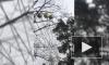 Кабинка колеса обозрения в Зеленогорске опасно раскачалась
